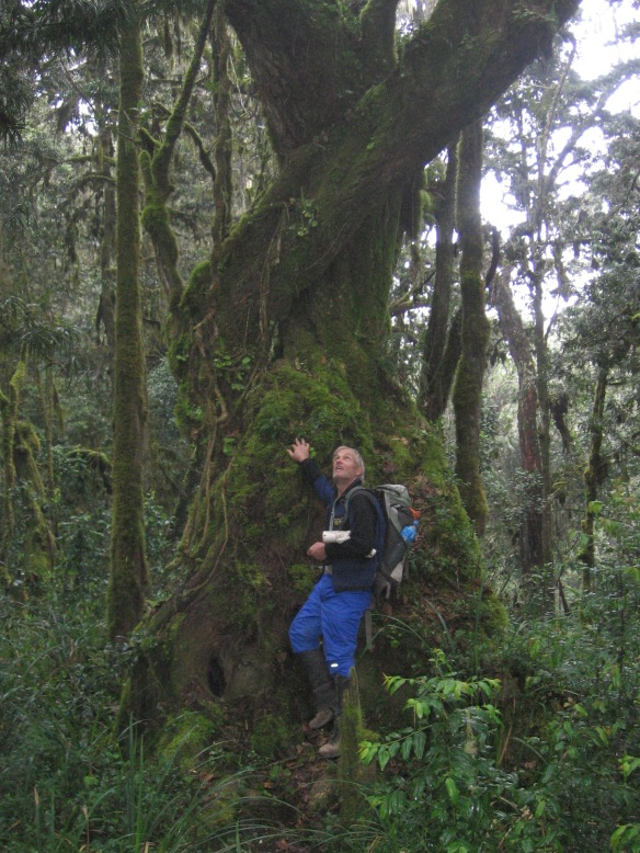 Craig Wilson, during his descent through the cloud forest at the base of Mt. Kilimanjaro that inspired the following Haiku: Why Climb Trees? Why? To touch the sky! Why? For all the world to see... One must climb a tree!
