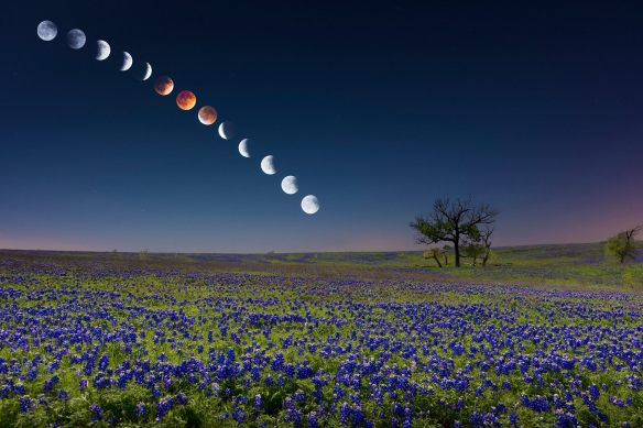 After staying out till 6 a.m. on April 15, photographing the different phases of the eclipse over a spectacular field of bluebonnets near Ennis, Texas, Mike Mezeul II created this fabulous composite that was making the rounds on Facebook, among other places. Prints are available at http://tinyurl.com/nkazyum. (Credit: Mike Mezeul II.)