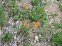 Orange paintbrush