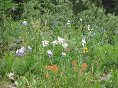 Flowers14_Ouray