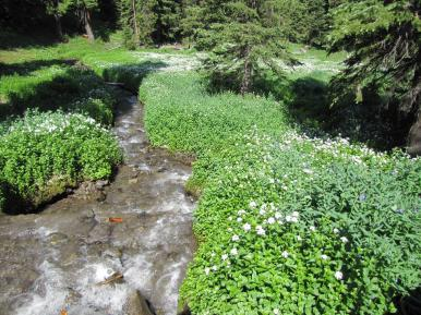 Streams and wildflowers.