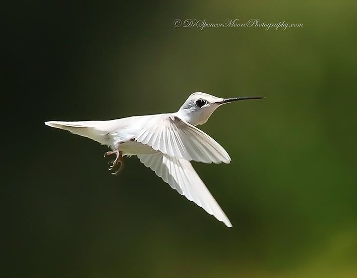 Angel in Flight (6/6)