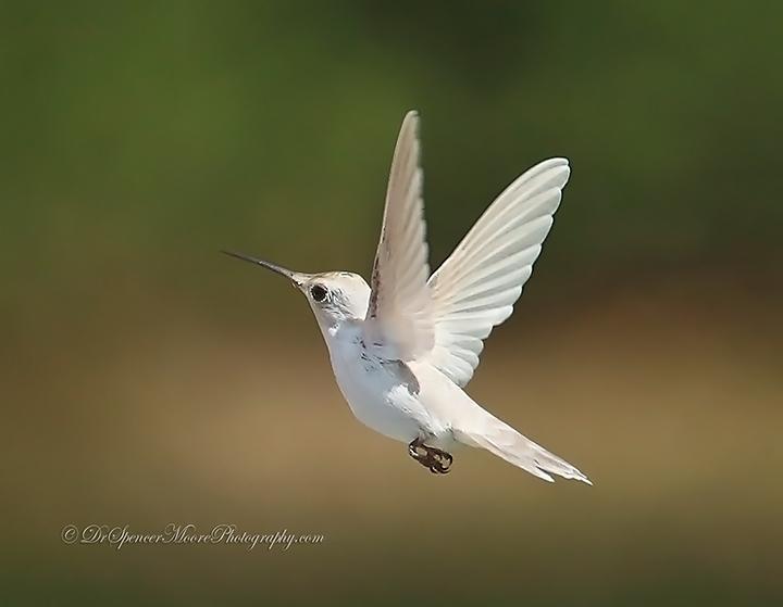 Angel in Flight (5/6)