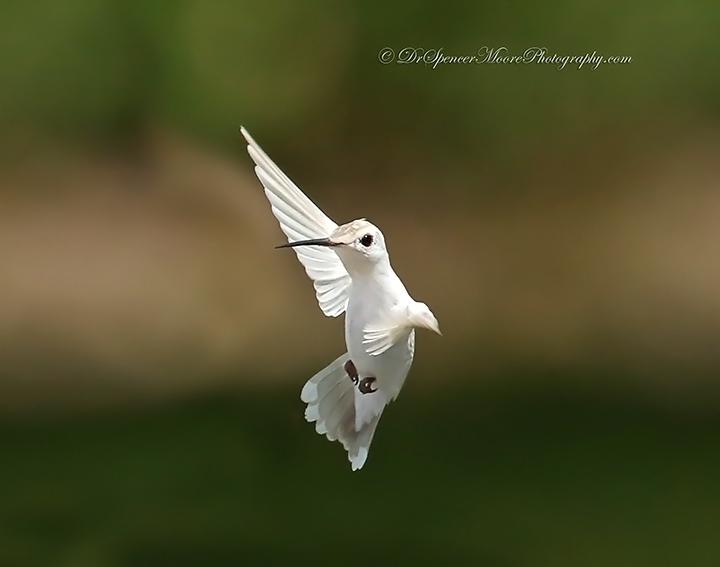 Angel in Flight (4/6)