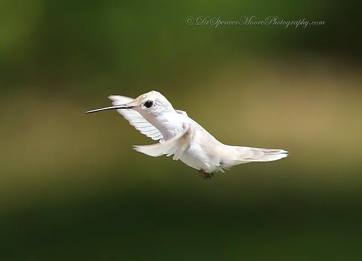 Angel in Flight (3/6)