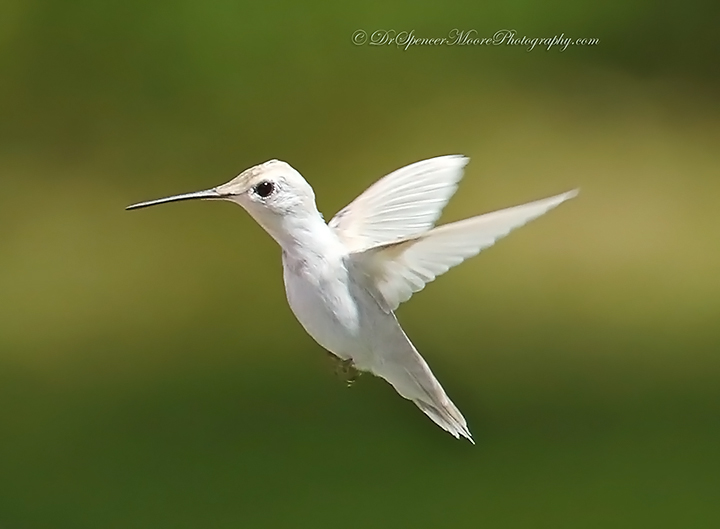 Angel in Flight (2/6)