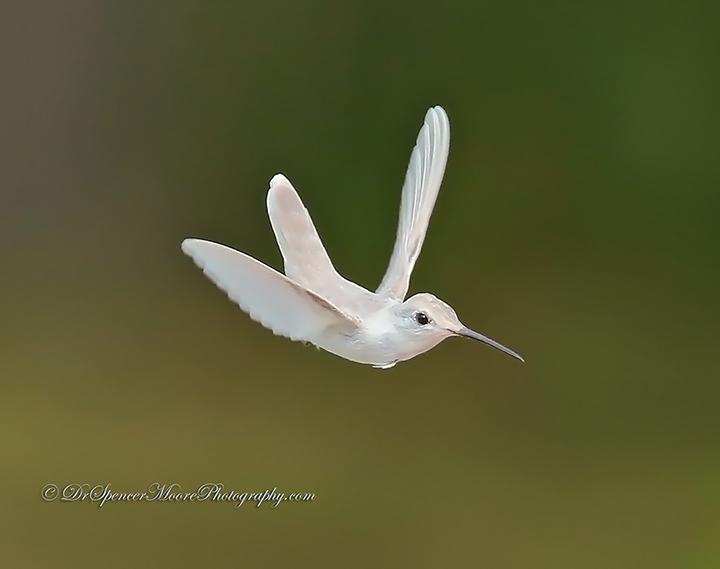 Angel in Flight (1/6)