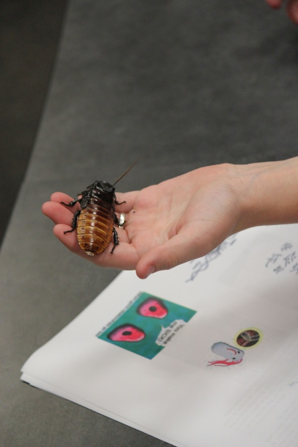 Wilson routinely brings his cockroaches and other insects to K-12 classrooms and educational outreach events (in this case, Expanding Your Horizons) held at Texas A&M and other universities to allow kids of all ages to get up close and personal with their environment.
